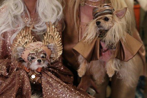 В Нью-Йорке прошёл ежегодный показ мод с участием собак (26 фото)