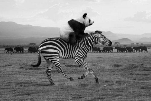 Фотограф показал, как выглядит реальная жизнь диких животных, пока их не видит человек (23 фото)