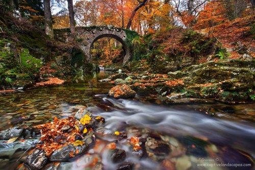 Живописные мосты по всему миру (13 фото)