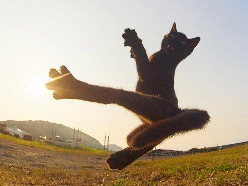 19 фотографий с кошками, в совершенстве владеющими боевым искусством ниндзюцу