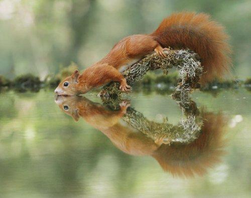 Прелестные сцены из жизни дикой природы в фотографиях Джулиана Рада (30 фото)