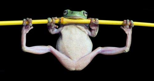 ТОП-10: Удивительные факты о лягушках, доказывающие, что они — фантастические создания