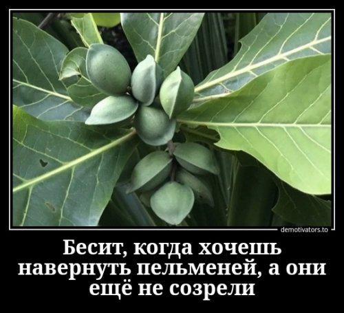 Свежих демотиваторов пост (14 шт)