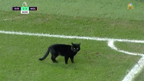 Чёрная кошка прервала матч, решив побегать по футбольному полю (4 фото + видео)