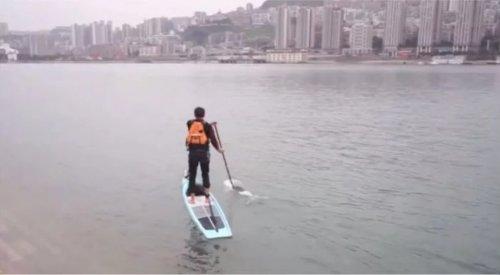 Китайский служащий переплывает реку Янзцы на доске для сёрфинга, сократив дорогу на работу с часа до 6 минут (фото + видео)