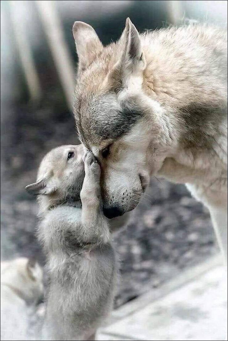 зайчонок и волчонок картинки почве соперничества девушки