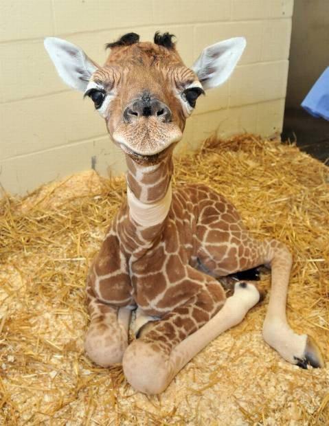 Прелестные детёныши животных, которые вызовут улыбку (24 фото)
