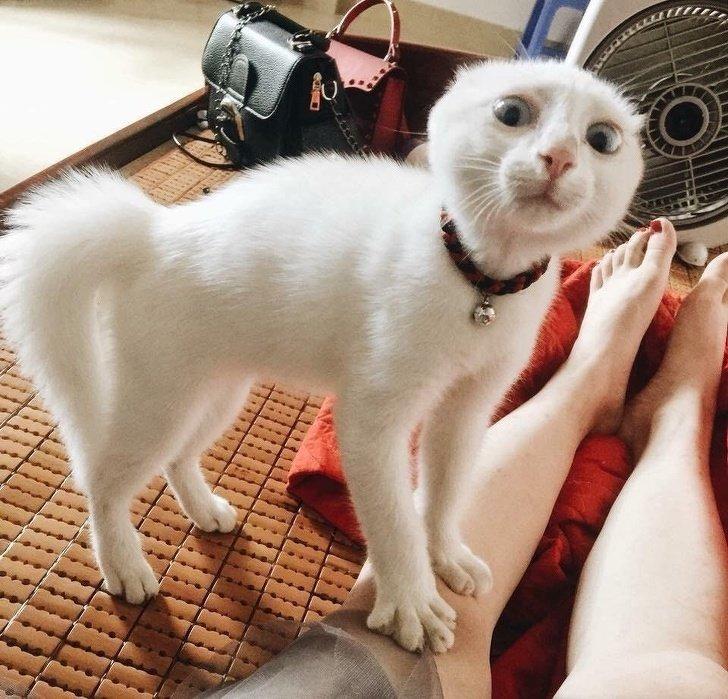 картинки про приколы с кошками очень смешные до слез 2016 плавбазах проживали только