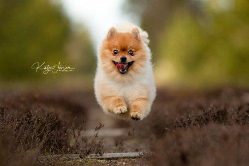 Летающие от счастья собаки Катьи Мёллер Дженсен (14 фото)