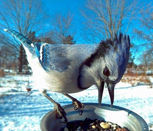 Любительница природы установила кормушку со встроенной камерой и фотографирует прилетающих птиц с близкого расстояния (23 фото)