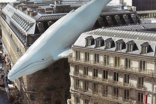 Сюрреалистические фотоманипуляции Джоанны Келер (15 фото)