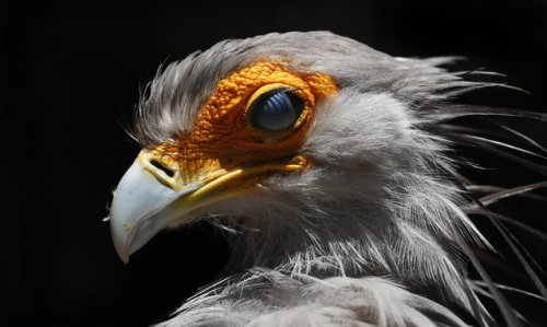 Мир птиц в коллекции избранных снимков (20 фото)