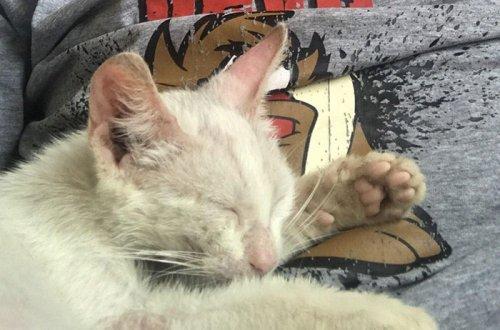 Парень случайно вздремнул на веранде, а проснулся уже владельцем очаровательной кошечки (5 фото)