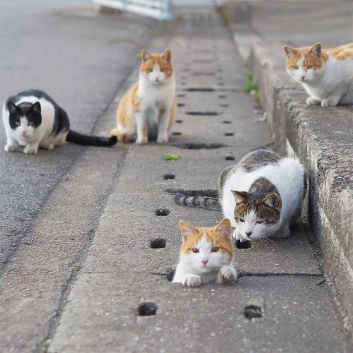 Японец фотографирует уличных кошек, которые превратили улицу в собственную игровую площадку (24 фото)