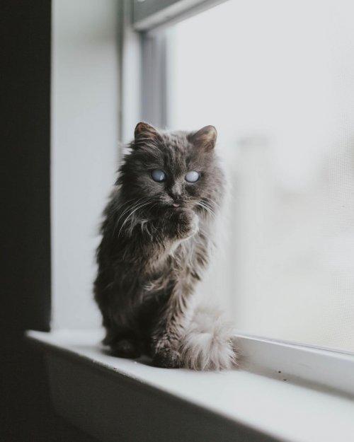 Кот Мерлин, покоривший Instagram своей необычайной внешностью (9 фото)