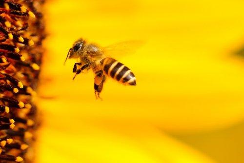 Морган Фриман превратил своё ранчо в пчелиный заповедник, чтобы спасти планету (4 фото)