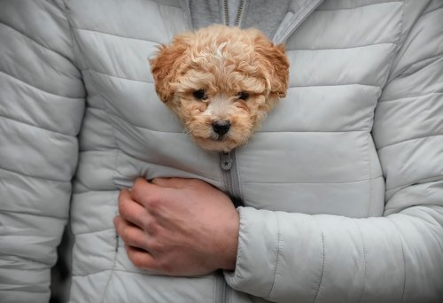 Фотографии, посвященные Национальному дню щенков (14 фото)