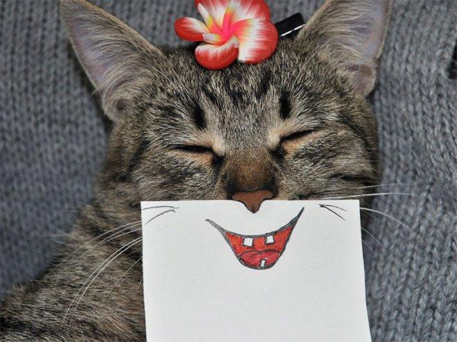 Самые смешные котики, которых вы сегодня увидите (20 фото)