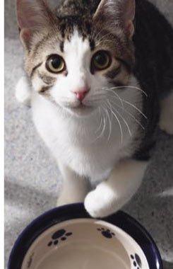 Душераздирающие кадры: котики, которые не ели уже полчаса! (12 фото)
