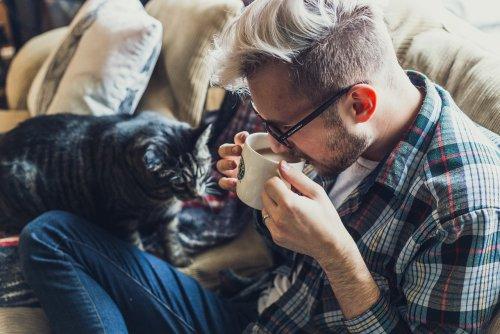 Кошки прекрасно понимают, когда их зовут — они просто игнорируют нас. И японские исследователи это подтверждают (6 фото)
