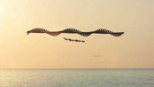Орнитографии: испанский фотограф показывает, как выглядели бы следы птиц, если бы они оставляли их в небе (14 фото)