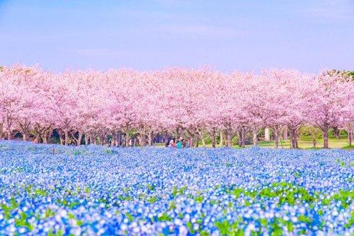 Японский фотограф запечатлел невероятно живописный весенний пейзаж (3 фото)