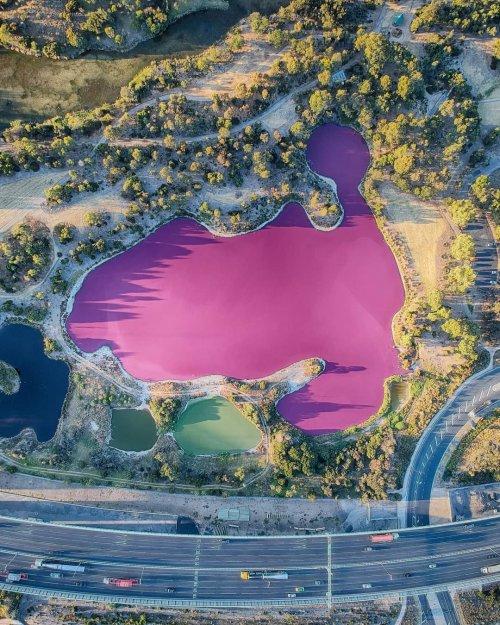 Солёное озеро в Мельбурне превратилось в розовую достопримечательность (8 фото)