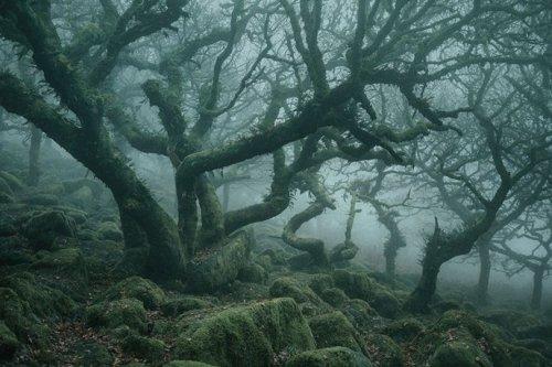 Заколдованный лес существует в реальной жизни, и он находится в Дартмуре (6 фото)