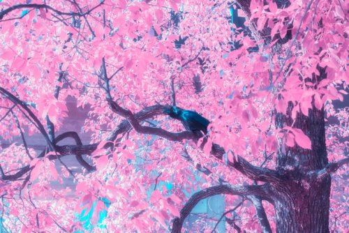 Как бы выглядел мир, если бы к четырём временам года прибавилось ещё и пятое — розовое (11 фото)