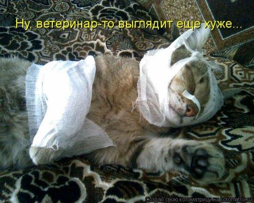 Лучшая котоматрица недели (38 фото)