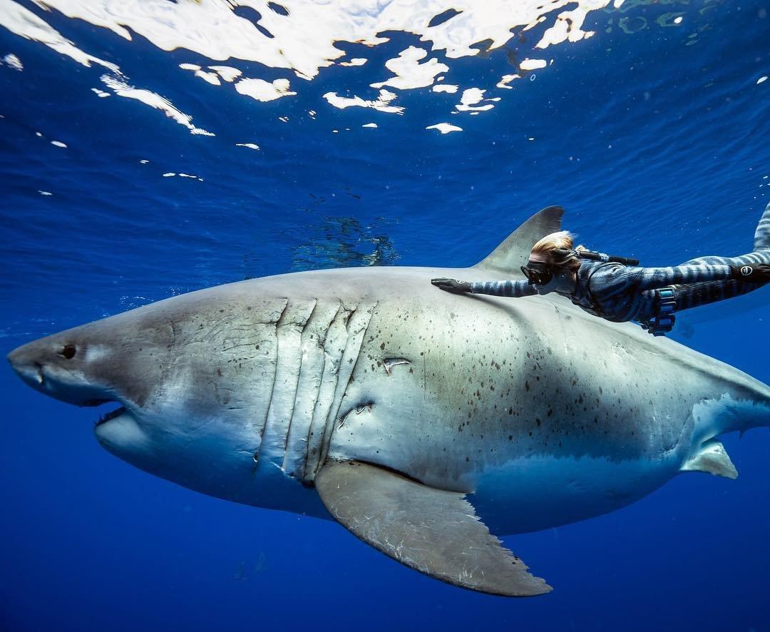 модельеры смотреть фотографии акул прошлом веке