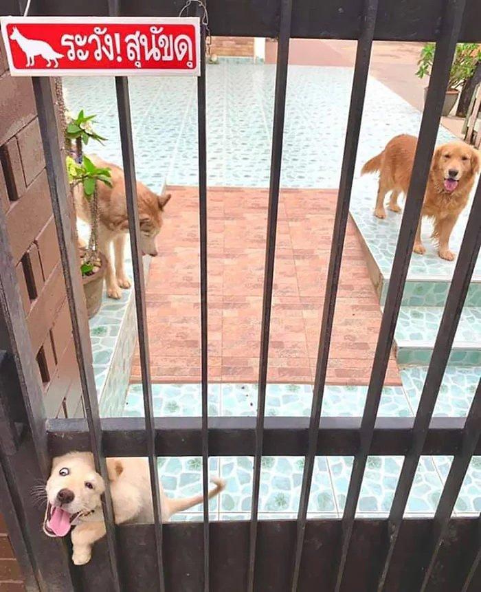 25 собак, которые своим дружелюбием и милотой свели на нет эффект пред