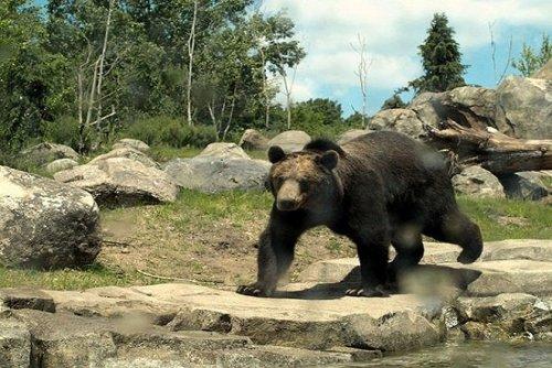 Зоопарк в Миннесоте