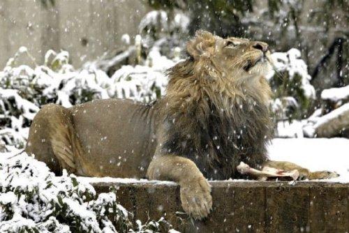 Смитсоновский Национальный Зоопарк
