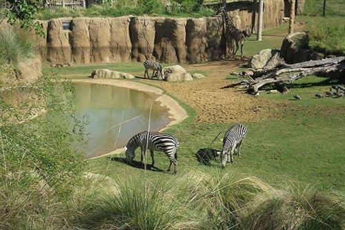 Зоопарк в Далласе