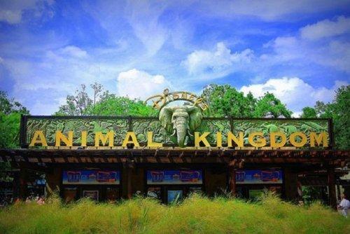 Диснеевское Королевство животных