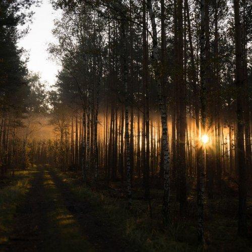 Фотограф-самоучка исследует леса Польши, запечатлевая красоту деревьев (31 фото)