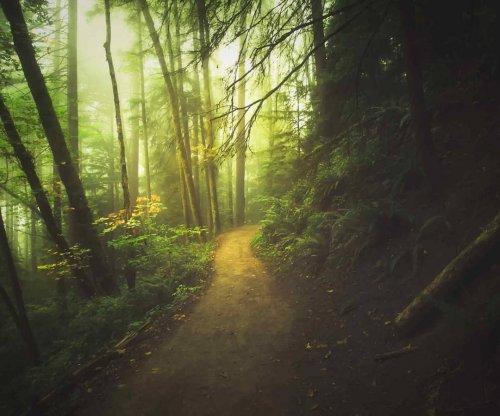 Волшебный и сказочный лес, в котором запросто могли происходить истории Толкина (11 фото)