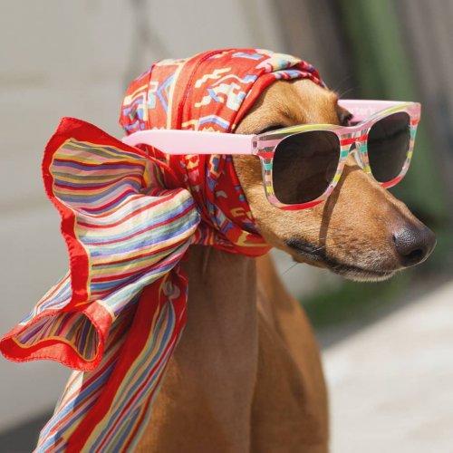 Знакомьтесь с Джоуи, собакой, которая является профессиональной моделью (13 фото)