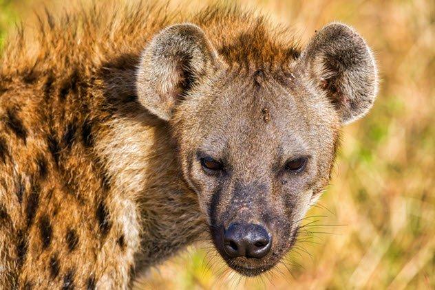 ТОП-10: «Факты» о животных в Древнем мире