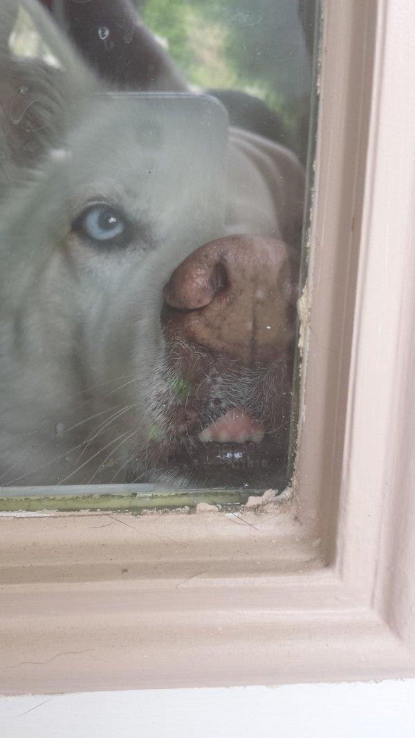Прикольные картинки о непростых взаимоотношениях животных со стеклом (