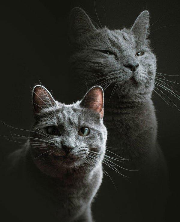 Что бывает, когда просишь посидеть со своей кошкой друга-фотографа? Пр