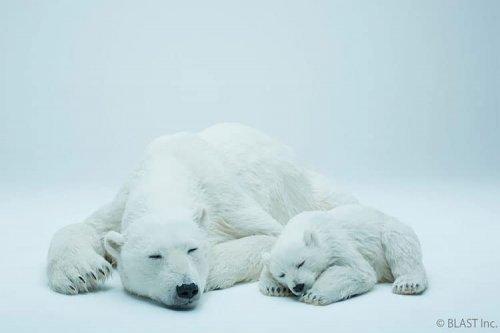 Японский специалист по спецэффектам создал реалистичные скульптуры спящих белых медведей, которых не отличить от настоящих (7 фото)