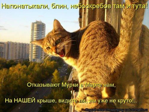 Котоматрица - 3 - Страница 36 1559928755_kotomatricy-23