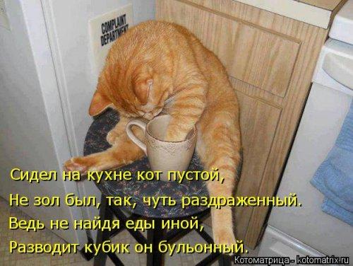 Котоматрица - 3 - Страница 36 1559928770_kotomatricy-2
