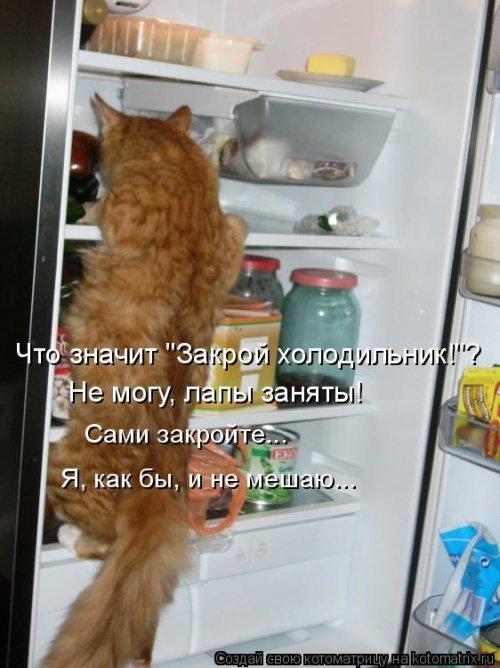 Котоматрица - 3 - Страница 36 1559928773_kotomatricy-21