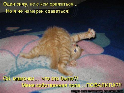 Котоматрица - 3 - Страница 36 1559928776_kotomatricy-7