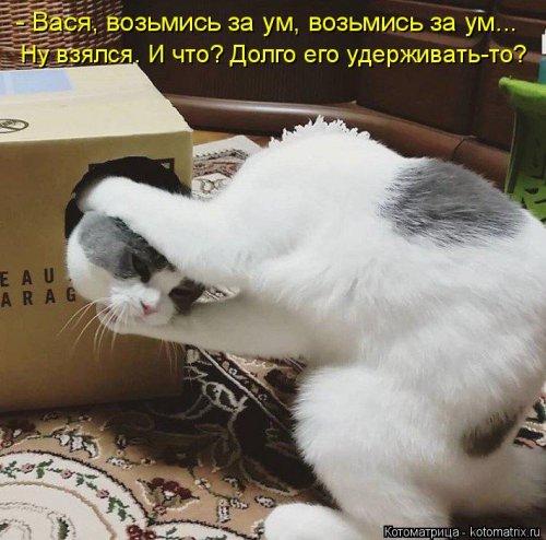 Котоматрица - 3 - Страница 36 1559928788_kotomatricy-15