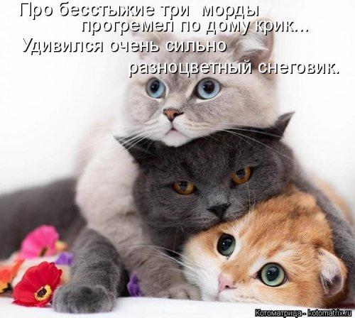 Котоматрица - 3 - Страница 36 1559928788_kotomatricy-22