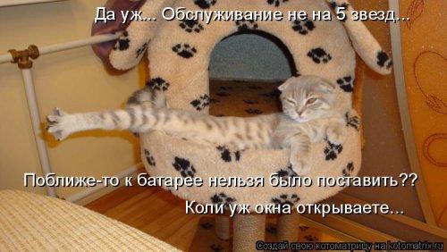 Котоматрица - 3 - Страница 36 1559928789_kotomatricy-24